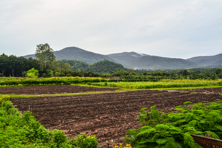 Planted plots prepared for growing vegetables and fruits in rural Thailand Stock fotó