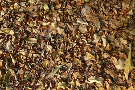 futile: Dry leaf that pile up Stock Photo