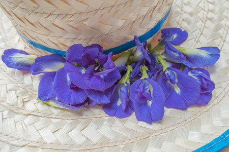 pea shrub: Butterfly Pea flowers on brim Stock Photo