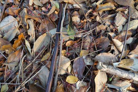 hojas secas: Las hojas secas para los fondos y texturas