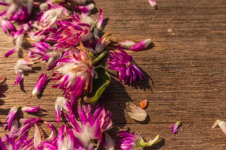 amaranth: Globe amaranth beauty flower on wood background Stock Photo