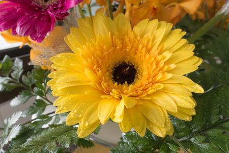 gerberas flowers in a vase.