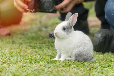 Close up little white grey rabbit sitting on fresh green grass background.