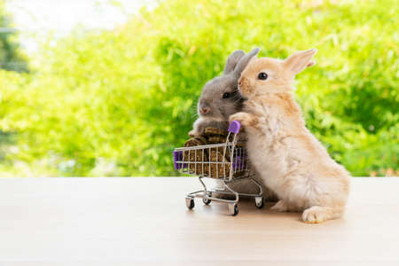 Easter holiday bunny animal and shopping online concept. Two adorable baby rabbit grey and brown pushing together purple shopping basket cart with cookie carrot standing over green nature background.