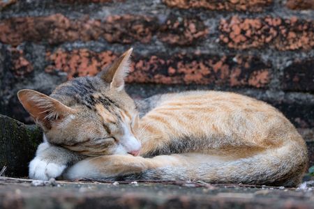 Sweet dream cat in Historical Temple Stone 免版税图像