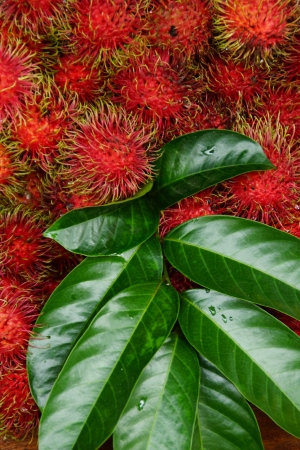 Rambutan, Thai Exotic Fruit of Thailand photo