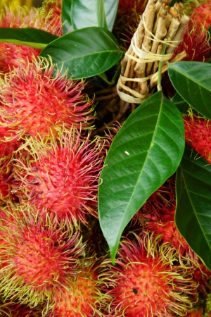 Rambutan, Thai Exotic Fruit of Thailand Stock Photo