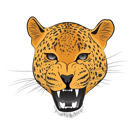 undomesticated cat: Cheetah Vector Cartoon