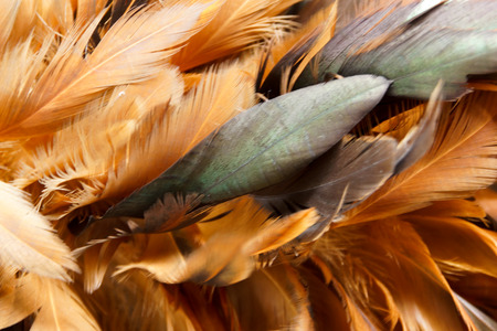 Closeup of Chicken Feather Duster Stock Photo
