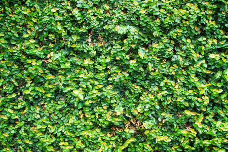 Green Leaves Wall Texture and Background