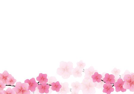 Cherry blossom, Sakura fiori rosa sfondo.