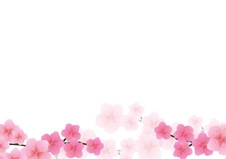 Kirschblüte, Hintergrund Sakura rosa Blüten.