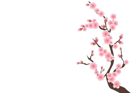 벚꽃 꽃 배경입니다. 일러스트