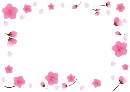 Cherry blossom,Sakura pink flowers  background.