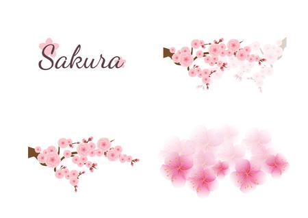 Cherry blossom flowers background. Sakura  pink flowers background. Ilustrace