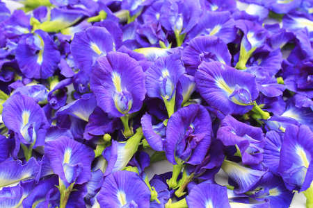Blue Butterfly Pea Flowers for Herbal Shampoo photo