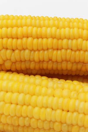 Sweet yellow corns on white background Stock Photo