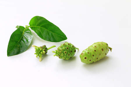great morinda: Unripe and Ripe Great Morinda on the white background