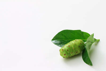great morinda: A Great Morinda on the white background