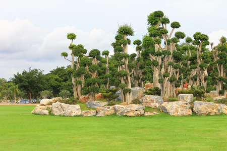 Group of bonsai trees displayed in the garden with stone and green grass