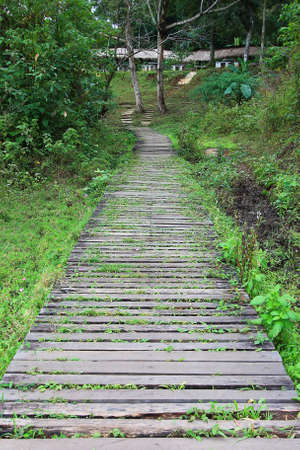 Long forested pathway leading to the houses on the hill