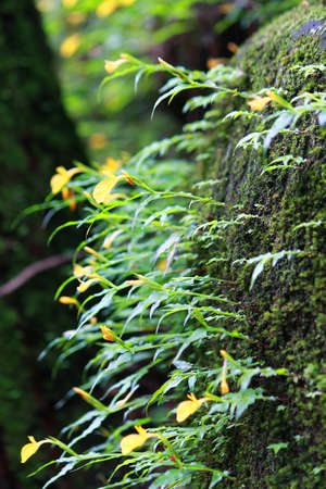 Moss and Fern covered the stone in the rainforest