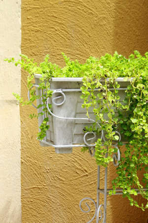 d       cor: White planter used for decoration filled with fresh green plants