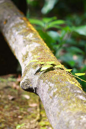 Fresh leaves covered the wood in the rainforest