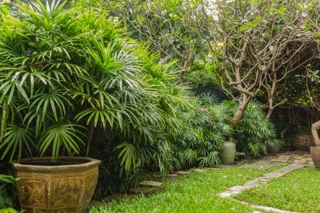 Rhapis excelsa bush