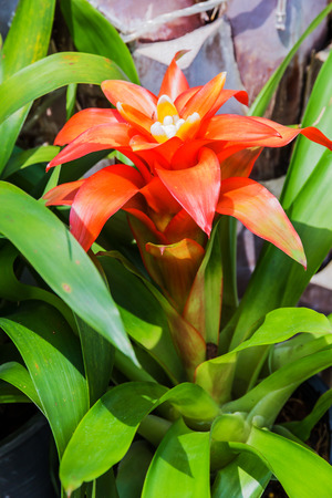 Bromeliad simulated  tropical forest of South America photo
