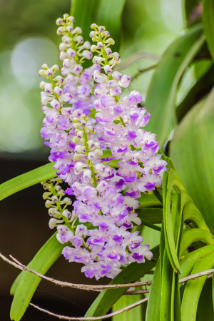 Beautiful bouquet of purple orchids in the wild. photo