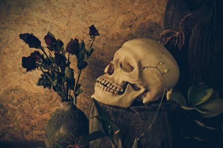 Still life with a human skull with desert plants, cactus, roses and dried flowers in a vase beside the timber.
