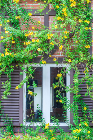 Wood window wall and ivy-covered vegetation and colorful flowers. photo