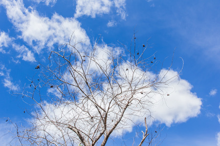 Abstract tree branches isolated on sky background  photo