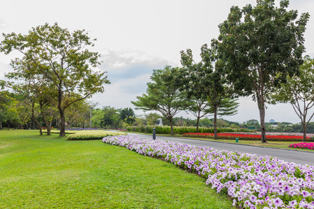 grass plot: Park with trees and grass along the corridor with  beautiful flower. Stock Photo