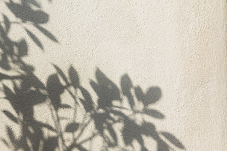 Leaf shadows on the wall used for text and image