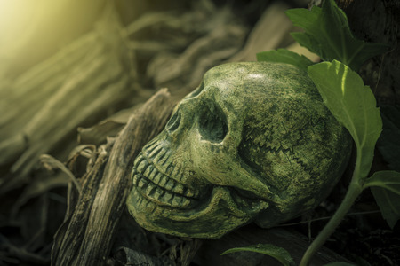 Still Life with human skull on the roots abstract concept Stock Photo