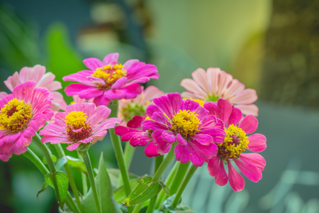 colourful lightings: vase of various types of flowers in Vintage Style outdoor Living - as part of the home decoration Stock Photo