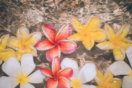 Frangipani flowers colorful tropical scent on water treatment in the health spa is illustrated and paste text.