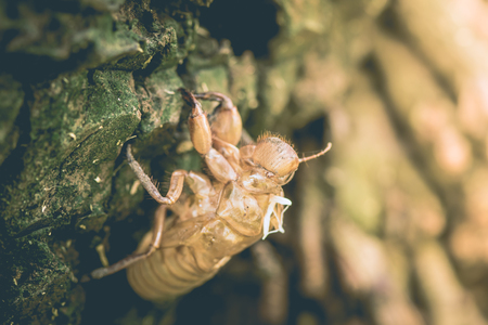 perched: insect cicadas moult  perch on trees