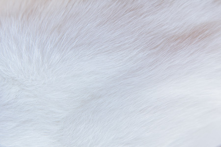 The cats fur-term proximity as detailed white. Reklamní fotografie