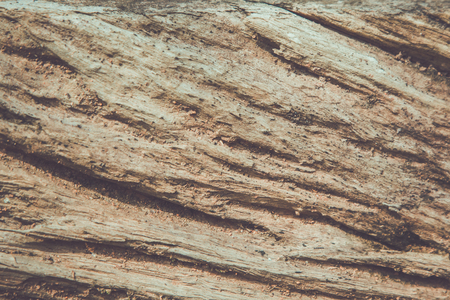 environmentalism: Old wood cracked texture used as background for text input.