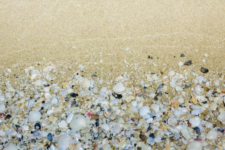 Shell and sand beach use as background image. Reklamní fotografie