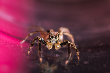 Spider jumping in Thailand is a colorful picture. Reklamní fotografie