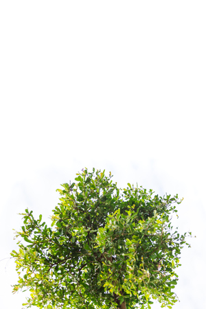 Group of green leaves isolated from white background.
