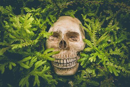 Human skull and green leaf are life concept backgrounds. Reklamní fotografie