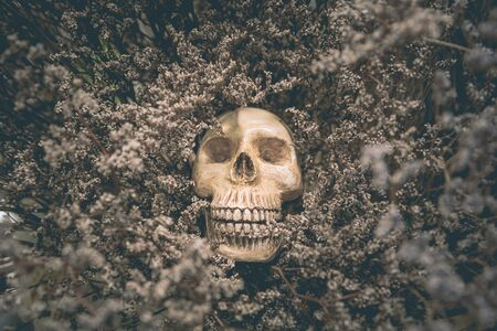 Human skull and old dried flowers are the life concept background. Reklamní fotografie