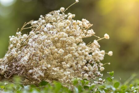 Dry flowers are used for the background image.
