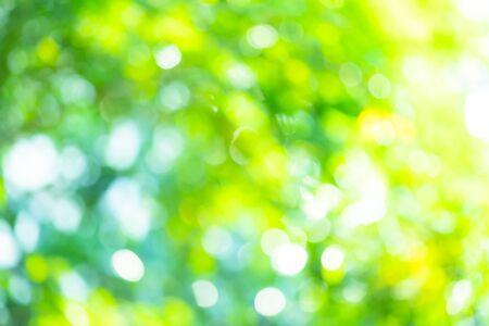 Abstract background Natural green bokeh