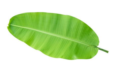 신선한 녹색 열 대 바나나 잎 클리핑 경로 포함하는 흰색 배경에 고립